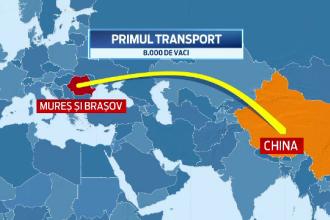Chinezii vor sa cumpere 25 de MIL. de oi si porci din Romania. Cat de pregatiti sunt fermierii