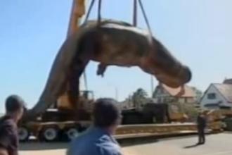 Caz bizar in Uruguay. O balena a