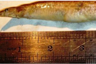 Un adolescent a ajuns la spital cu un peste de 15 centimetri infipt in gat. Cum s-a intamplat totul