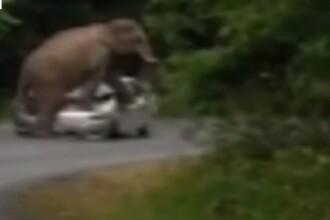 Scene de Jurassic Park cu un elefant care calca in picioare o masina pana o face zob. Scena de langa Bangkok a fost filmata