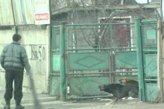 Seful ASPA acuza ONG-urile ca ar fi exportat maidanezii Capitalei unor retele de zoofilie. Replica lor: