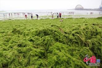 Poluarea din China a atins cote alarmante. Cum arata o zi pe o plaja plina cu alge moarte si deseuri: FOTO & VIDEO