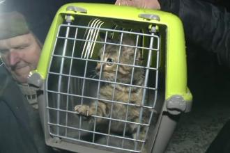 Mobilizare impresionanta a pompierilor si alpinistilor pentru a salva o pisica. Felina a supravietuit 11 zile intr-o fantana