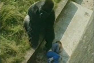 Reactia acestei gorile atunci cand un baietel cade in cusca ei. Imaginile care i-au lasat pe spectatori fara cuvinte. VIDEO