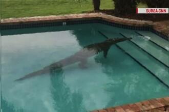 A crezut ca prietenii ii fac o gluma cand a vazut un crocodil la el in piscina. Ce s-a intamplat insa dupa cateva minute