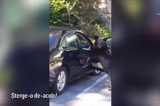 Ursii care isi semneaza sentinta la moarte, dupa ce au invatat sa deschida usa masinilor. Avertismentul transmis de biologi
