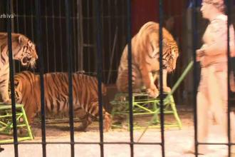 11 animale de la circul Globus, printre care 2 tigri siberieni, au murit in chinuri, intr-un incendiu. Reactia managerului