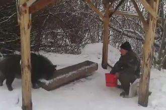 Un vanator din Slovacia a reusit ceva extrem de rar. Cum a fost filmat in preajma mistretilor, in timpul ninsorilor
