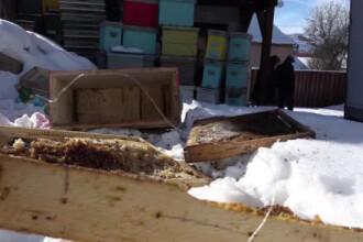 Un sat din Mures traieste de 3 saptamani sub teroarea fiarelor.