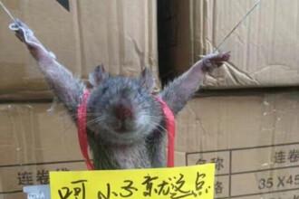 Pedeapsa inedita primita de un sobolan din China.