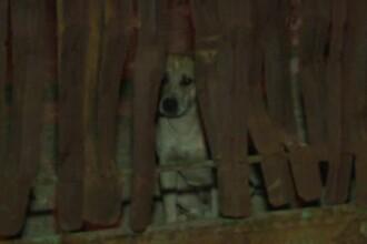 Barbat din Dambovita, ucis in curte chiar de cainii lui. Fratele victimei: