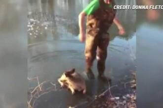 Scene emoționante în SUA. Un pui de căprioară blocat în gheață a fost salvat