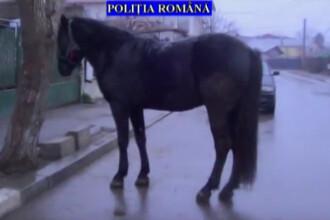 """Percheziții la 14 domicilii din Prahova. Un cal, printre """"bunurile"""" recuperate"""