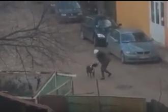 Trei persoane, rănite după ce au fost atacate de câini Amstaff. Bărbat mușcat în zona genitală
