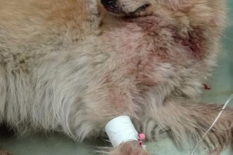 Câine împușcat în prezența proprietarului, la Constanța. Atacatorul se afla într-o mașină