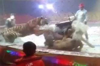 Luptă între un leu, un tigru şi un cal, la un circ din China. VIDEO