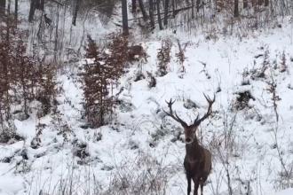 Scene incredibile surprinse într-o pădure din Caraș-Severin. Imaginile s-au viralizat rapid