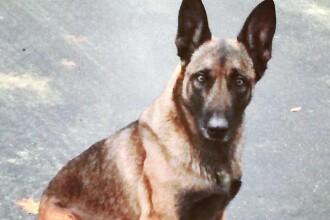 Băiat de 9 ani în stare gravă, la spital, după ce a fost muşcat de un câine lăsat liber de stăpân