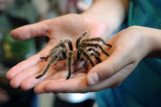 """Pățania unui bărbat cu fobie de păianjeni: """"De ce nu mori?"""""""