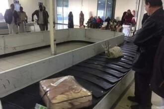 Un pasager a pus o gazelă vie la bagajul de cală de la avion. Reacţia autorităţilor