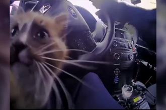 Pui de pisică salvat de pe autostradă, de un polițist. Ce a făcut apoi în mașina agentului