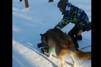 Copil atacat de un lup