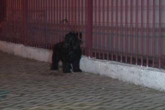 Bărbat mort în curtea Primăriei din Târgu Jiu. Reacția câinelui său