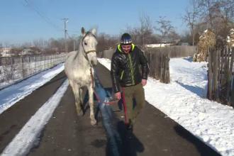 Cai loviți cu bestialitate în timpul unui concurs în Dâmbovița: