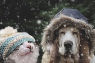 Vreme extrem de rece în toată țara, vineri. Ziua în care temperaturile revin la normal
