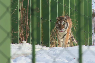 Iarnă grea pentru animalele din grădinile zoologice. Cum sunt protejate