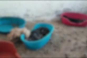 """Zeci de câini morți descoperiți într-un adăpost, în Brașov: """"Zici că eşti la Holocaust"""""""