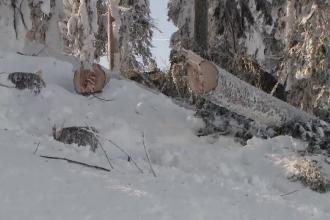 Rasună drujbele în Poiana Braşov. Pericolul apărut din cauza ninsorilor abundente