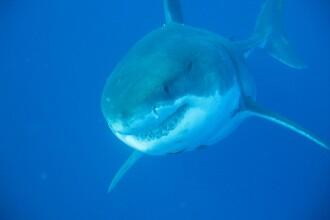 Turist ucis de un rechin, în Australia, în largul uneia dintre cele mai populare plaje
