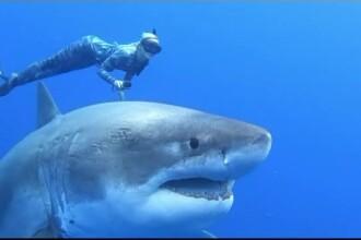 Întâlnire spectaculoasă în adâncuri. Câțiva scafandri au înotat cu un rechin uriaș