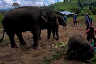 VIDEO viral. Ce pățește un turist care încerca să-și facă un selfie cu un elefant