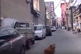 Un câine a ajutat o ambulanță să ajungă la stăpânul său care a leșinat în stradă. VIDEO