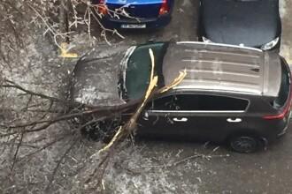 Șoferi nevoiți să elibereze o stradă, după ce un copac căzut a blocat traficul. VIDEO