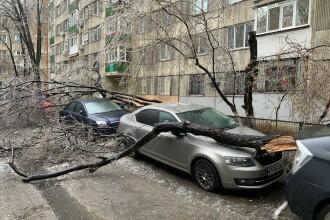 """Scene """"apocaliptice"""" cu sute de copaci căzuți din cauza ploii înghețate. GALERIE FOTO"""