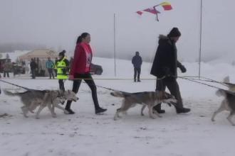 A treia ediție a concursului internațional de atelaje canine din Pasul Tihuța