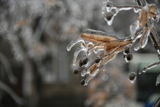 Specialiștii, îngrijorați de amploarea înghețului în România. Vegetația este afectată
