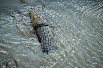 Un bărbat susține că a mușcat un crocodil pentru a-și salva copilul