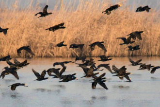 """Replica pescarilor la declarația lui Daea despre """"cormoranii care fac baie în piscine"""""""