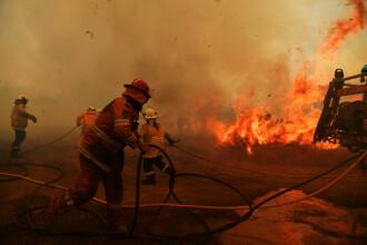 Ce suprafață de pădure a fost distrusă în urma incendiilor de vegetație din Australia