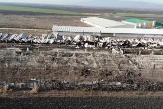 Situație macabră în Buzău. Mii de cadavre de porci abandonate într-o fermă