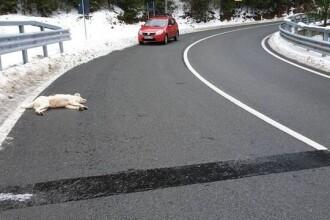Câine împușcat pe stradă, în Maramureș. Un copil de 6 ani a intrat în stare de șoc