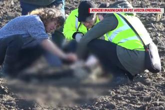 Trei câini au fost găsiți împușcați pe un câmp din Suceava.
