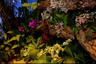 Expoziție spectaculoasă de orhidee în Moscova, deși temperaturile sunt sub zero grade