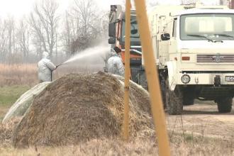 Focarele de gripă aviară s-au extins în 24 de localități. Autoritățile sunt în alertă