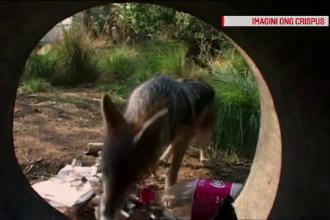 Animalele neobișnute care apar tot mai des în România.