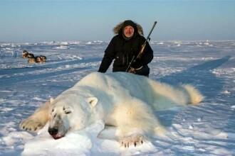 Urși polari măcelăriți pentru distracția bogaților. Cât plătesc pentru o partidă de vânătoare